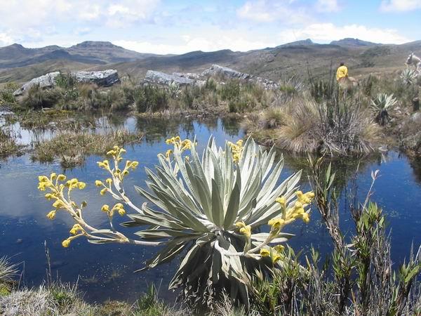 Informacion Parque Nacional Natural Chingaza Bogota